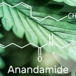 Todo lo que necesitas saber sobre la anandamida