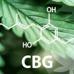 El mundo de los cannabinoides es muy extenso, y empieza con el CBG