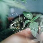 ¿Qué hace que los cannabinoides crudos sean tan especiales?