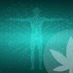 ¿Qué es la deficiencia endocannabinoide clínica?